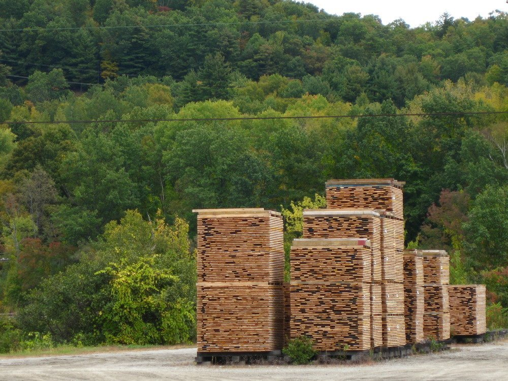 Forest_and_sawmill_082