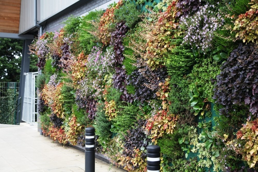 LIVING WALL FLOURISHES ON WAITROSE'S GREENEST STORE