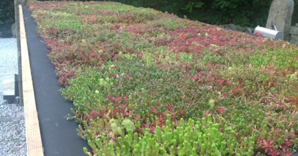 All About Riefa Green Roofs Specifier Review