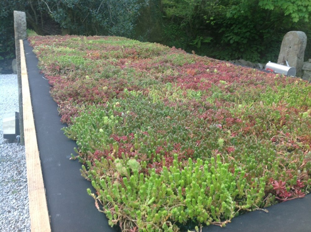 The Principles of Green Roof Maintenance