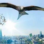 New proposals for a wilder Britain