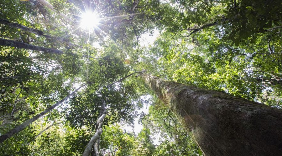 Tropical forests are vital for the future of our planets health and climate change mitigation – The TTF are trying to tackle misconceptions of tropical timbers.
