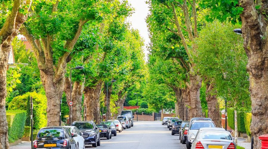 The Health & Well Being Benefits Of Urban Planting